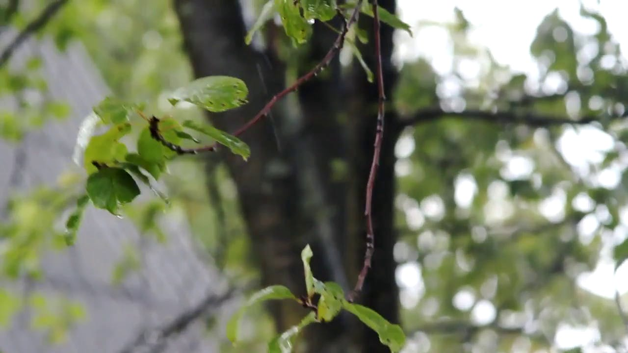 Rain falling on a tree stock footage