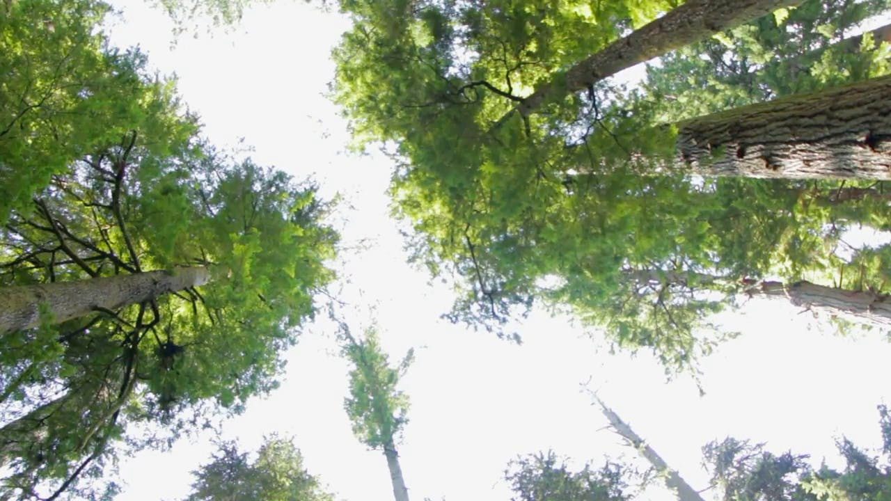 Look to the Sky in a Forest