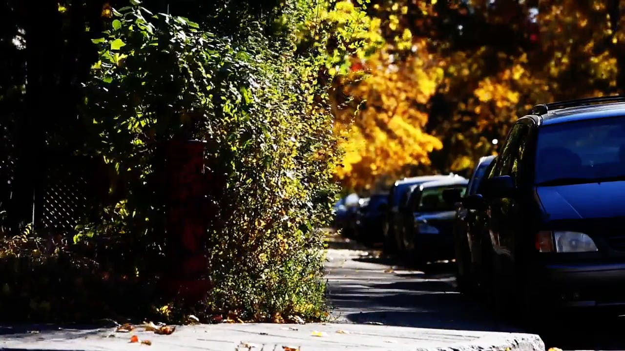 Cars in Street During Autumn