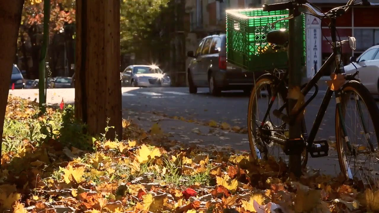 Bicycle Near Roadside in Autumn