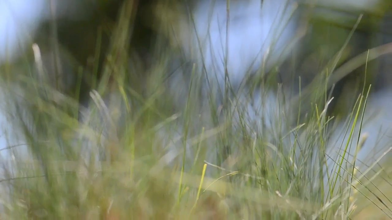 Smooth Green Grass Background clip