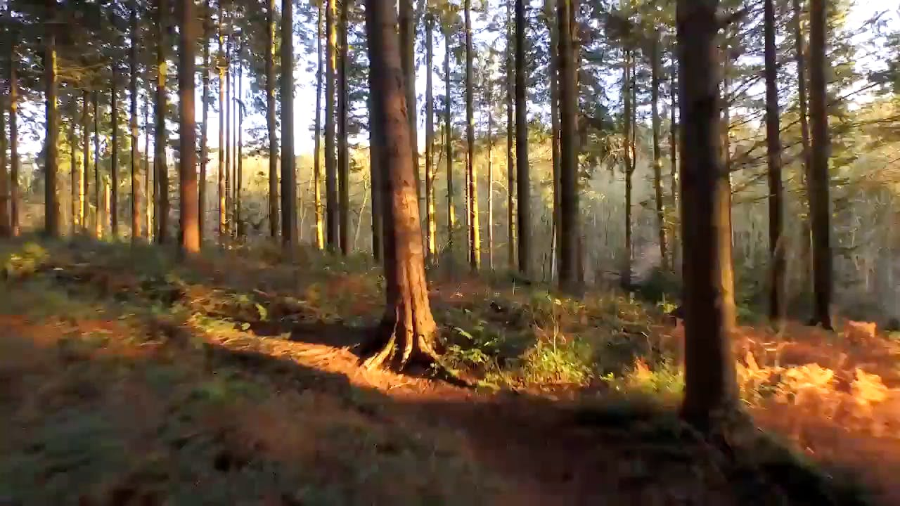 Flying Through Forest