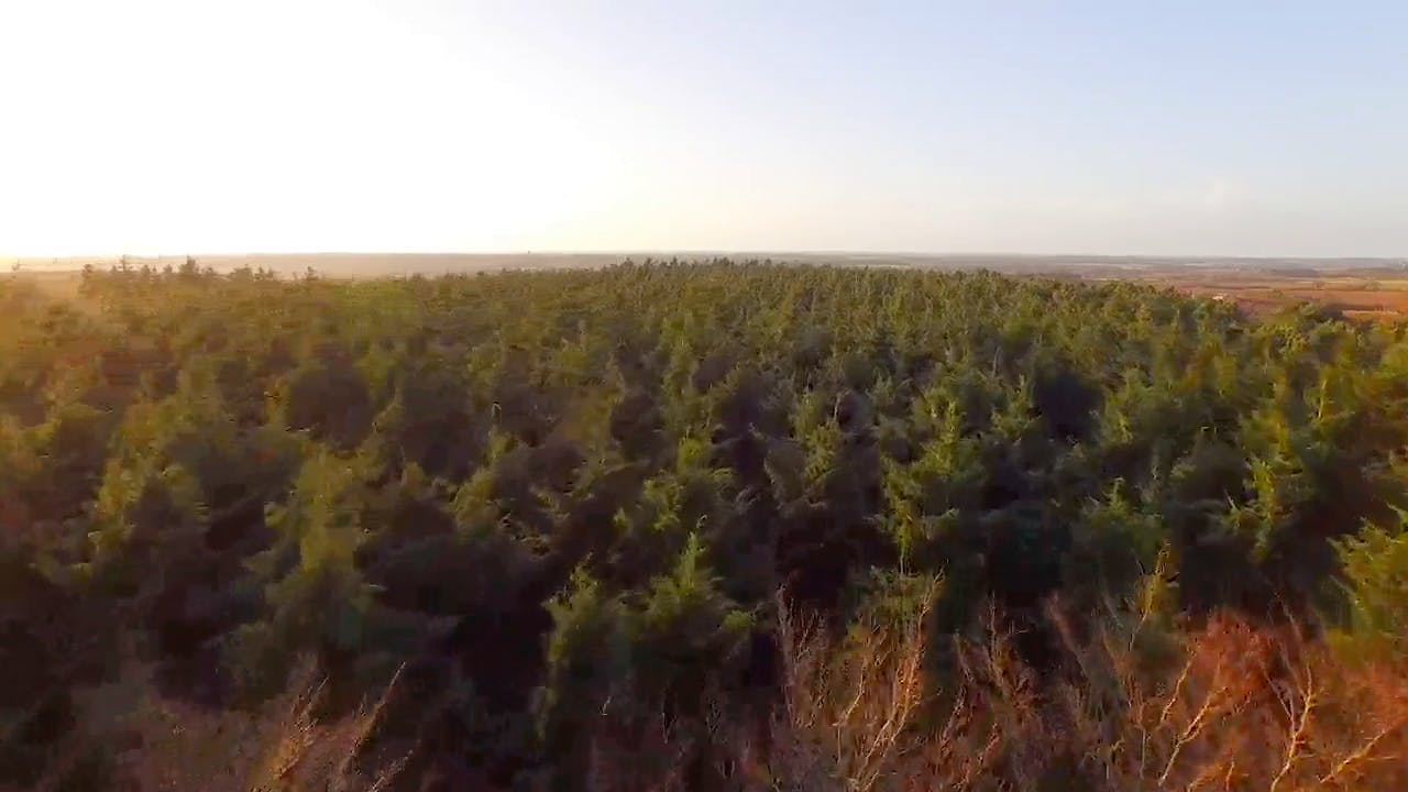 Flying Over Forest free background video
