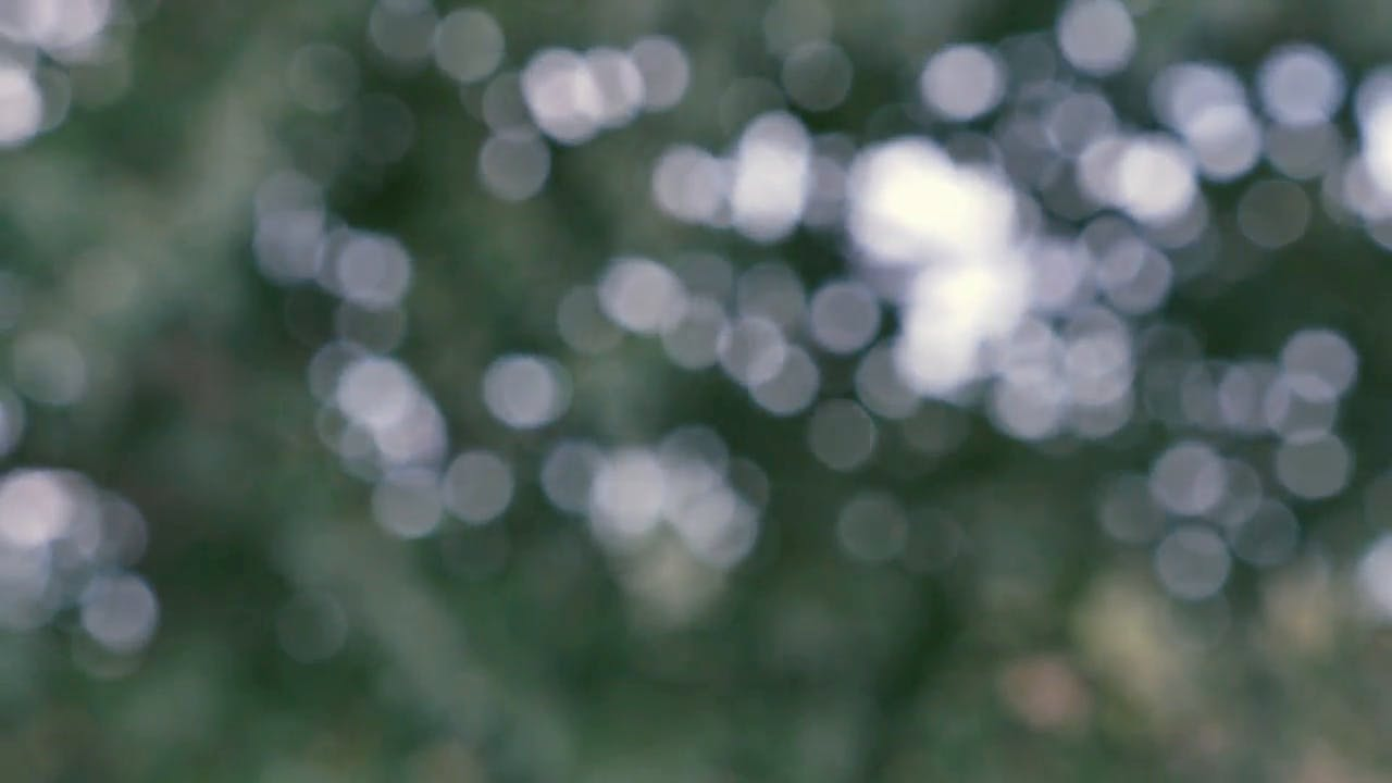 Abstract Bokeh Trees UHD background video clip