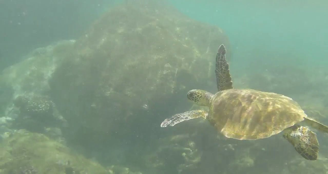Snorkelling in Oahu background clip
