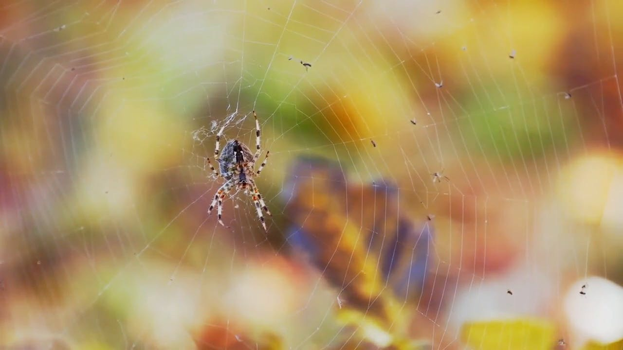 Spider and Web background