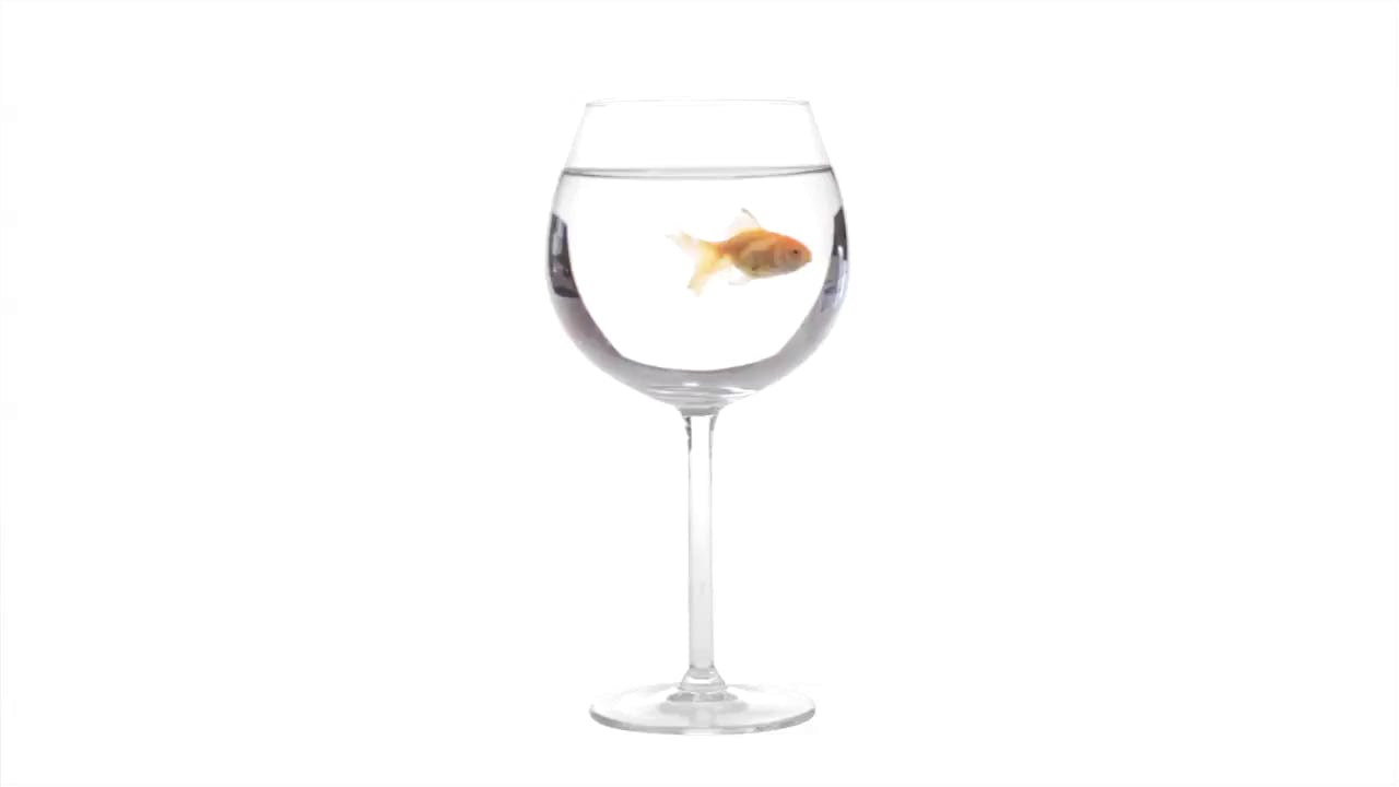 Goldfish in a glass