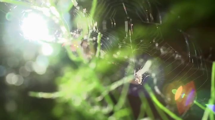 Spider and Fly in Super Slow Motion Stock Footage