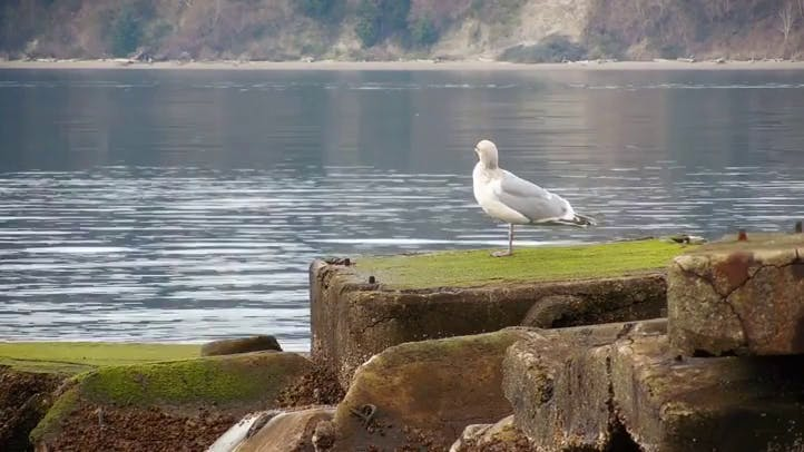 Seagull standing on a concrete platform Stock Footage Free HD Stock Video