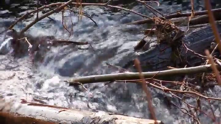 Closeup of River with Fallen Branches Free Stock Footage