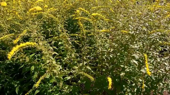 Bees on Yellow Flowers Free Stock Footage
