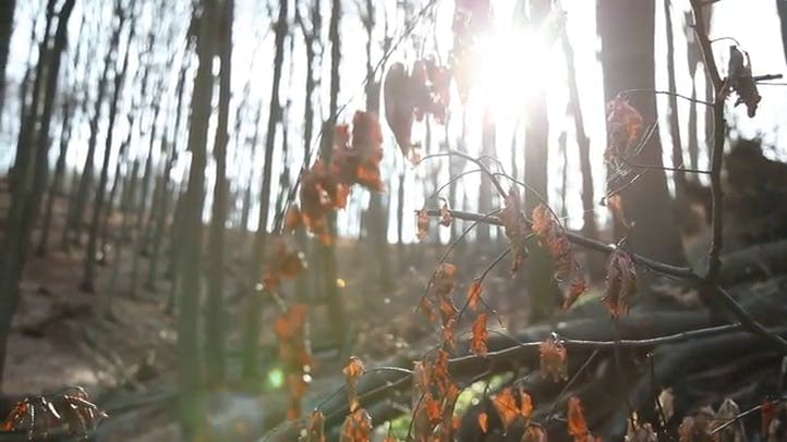 Wood Autumn in the Sunshine Free Video Stock Footage