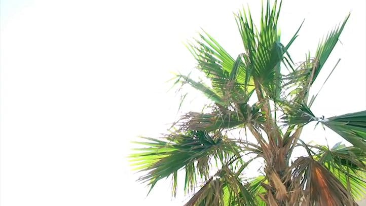 Palms and Wind blowing wind Free Video Stock Footage