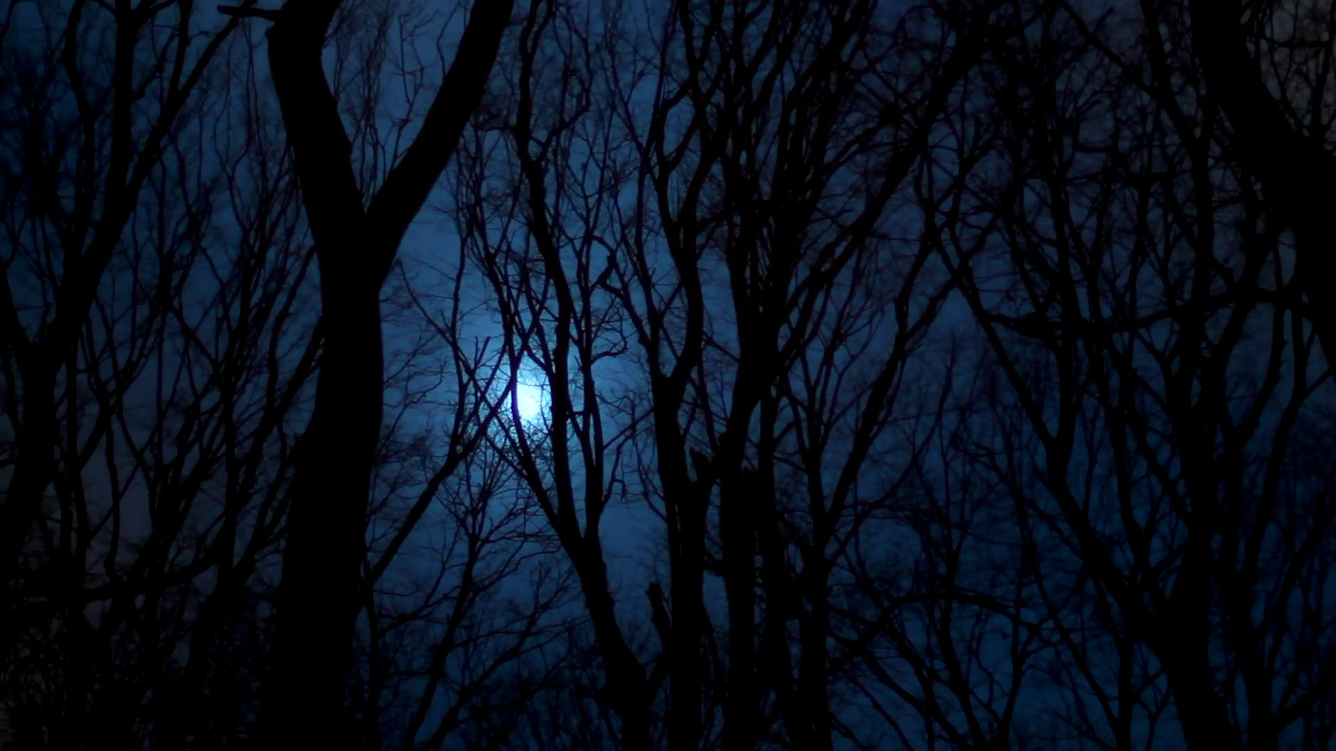The Dark Forest At Night stock video
