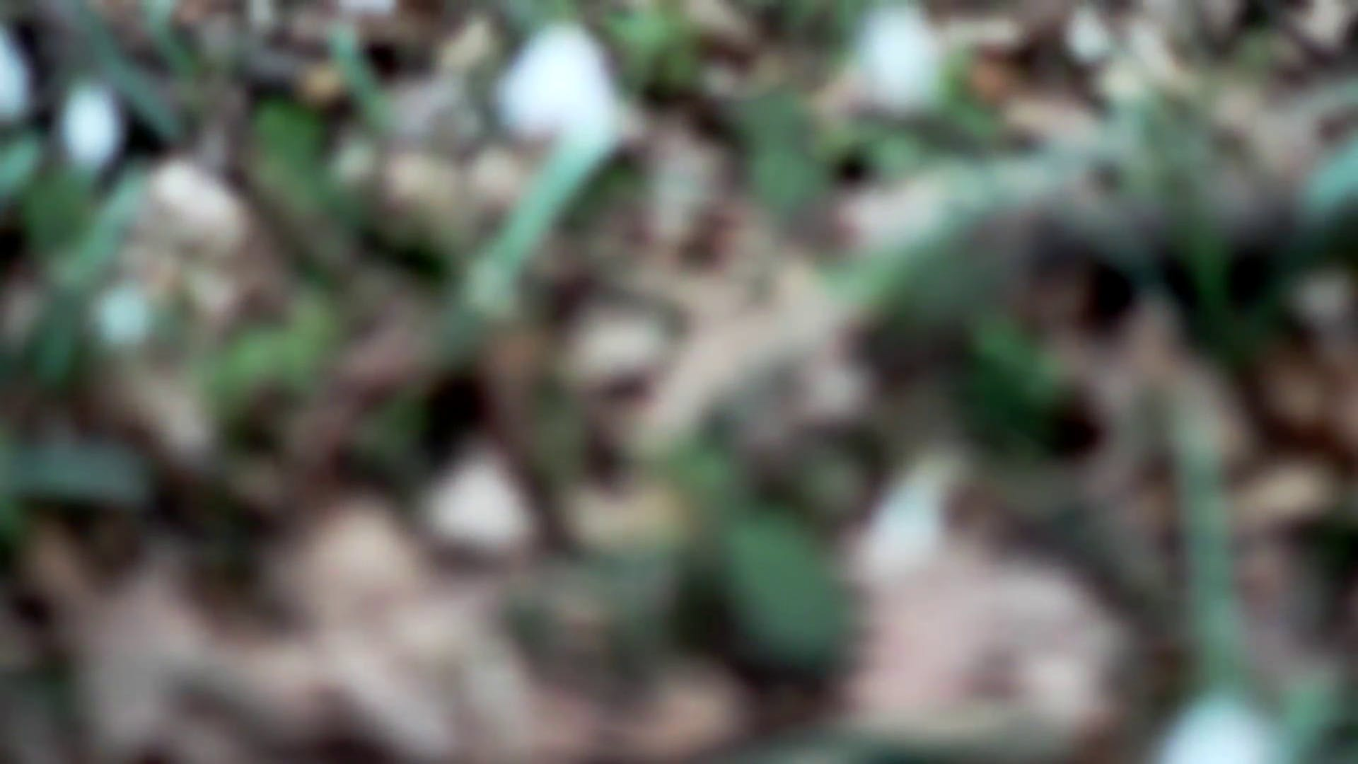 Snowdrops In The Woods stock video