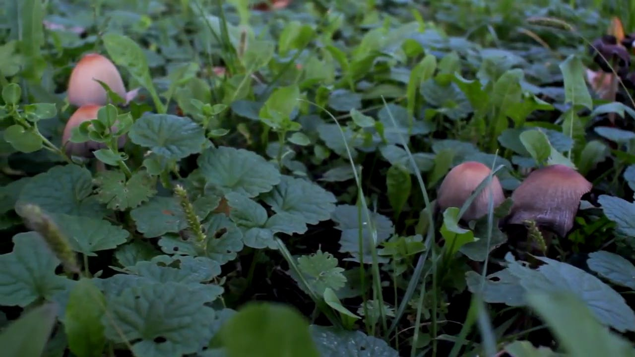 Planted mushrooms free stock video
