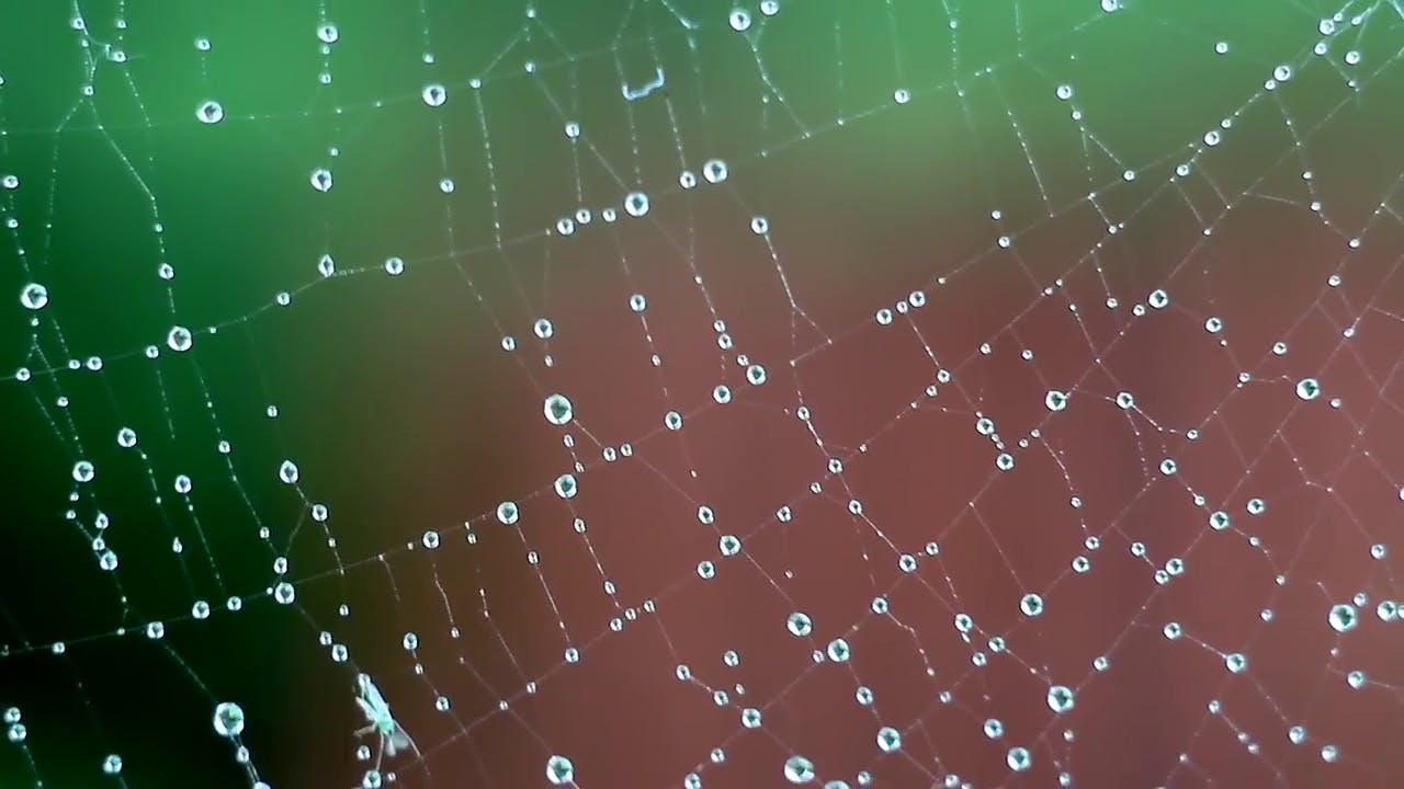 Spider Web Macro stock footage