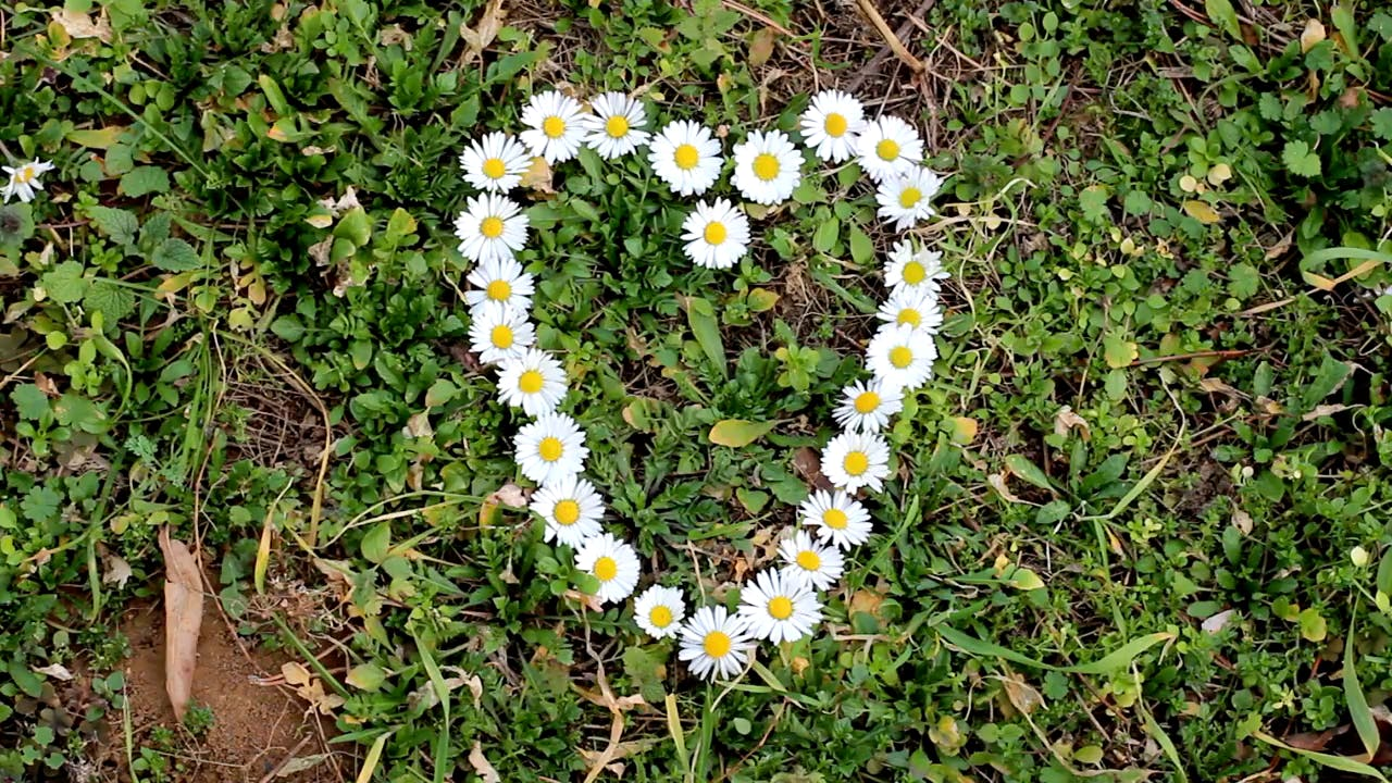 Heart made of flowers stock footage
