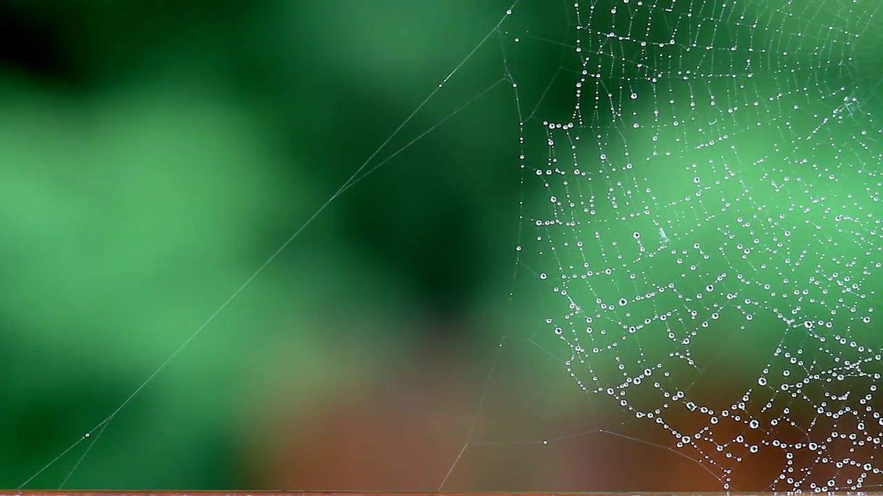 Spider web and downpour falling in background stock footage