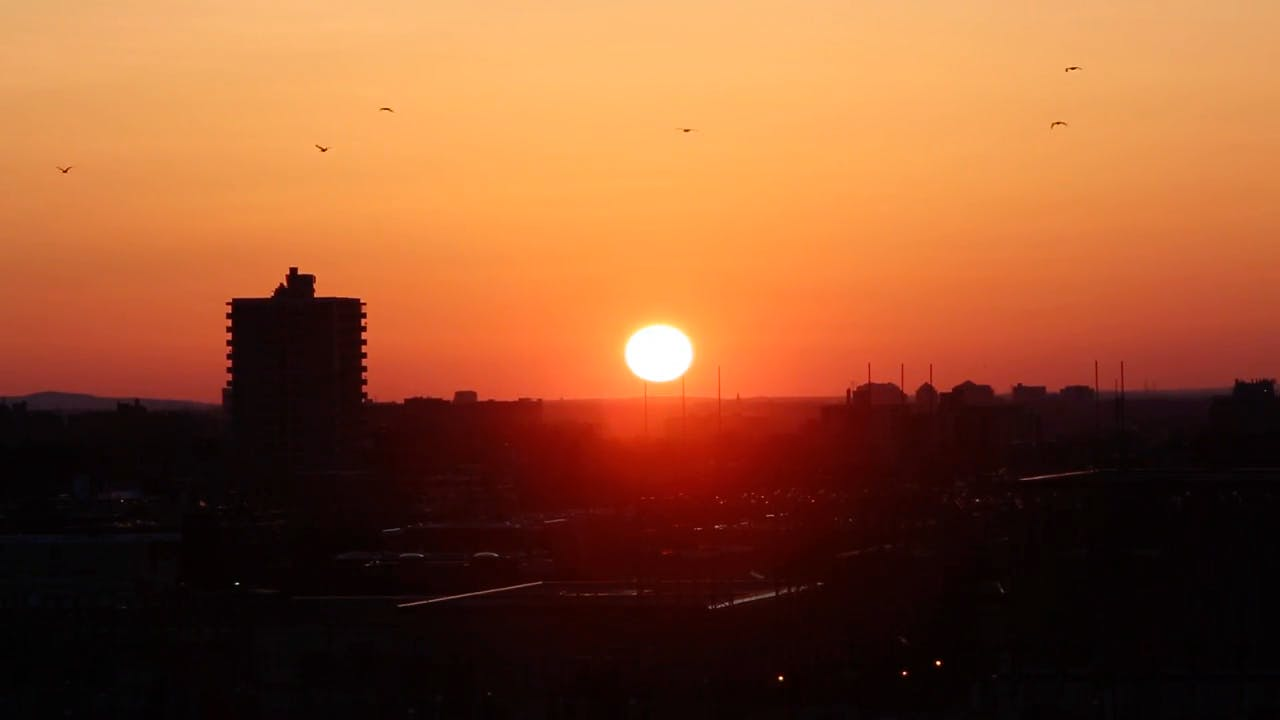 Birds Flying in the Sunset Stock Video