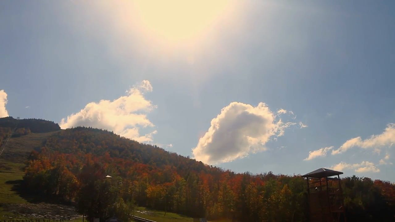 Forest Sky and Cloudy Sun stock footage